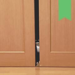 靴下猫/臆病ネコ/黒猫/ねこと暮らす/猫のいる暮らし/猫のいる生活/... お客さんが来たときの 我が家の主。(1枚目)