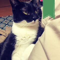 黒猫/ねこと暮らす/猫のいる生活/猫と暮らす/こんぶ/保護猫/... 抱っこも  満更でもない。  http:…