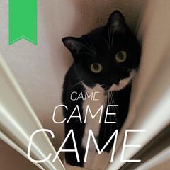 愛猫家/ねこと暮らす/猫との暮らし/レースカーテン/カーテン/部屋干し/... カーテンを洗って付けたときのこと。(2枚目)