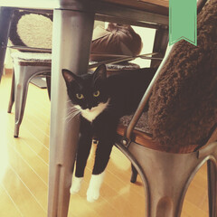 猫のいる暮らし/のんびり/靴下ねこ/黒猫/保護ねこちゃん/保護ネコ/... いつもは寒い、北の街も今日はあったかい〜…