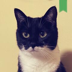 わがままねこ/にゃーご/バッドマン/野良/誕生日はじつはわからないの/靴下猫/... 2歳になりました。