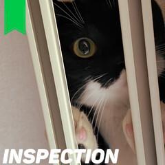 愛猫家/ねこと暮らす/猫との暮らし/レースカーテン/カーテン/部屋干し/... カーテンを洗って付けたときのこと。(3枚目)