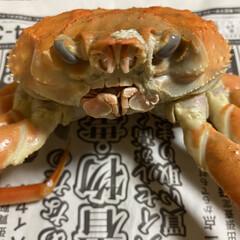 道東/ドートー/蟹/カニ/知床/羅臼 前歯があるよね?   え