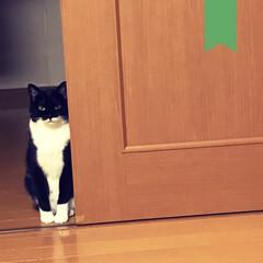 保護猫/黒猫/靴下猫/わがまま猫/猫のいる暮らし/猫と家/... 鏡も テレビも ケータイも 見たらダメだ…