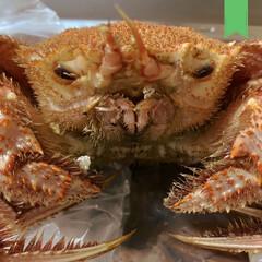 贅沢/毛蟹/おうち時間/みうらじゅん 毛蟹はブサイク。  こんぶは匂いに惹きつ…