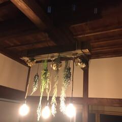 ロープ/フィラメント/フェイクグリーン/照明/野地板/DIY/...