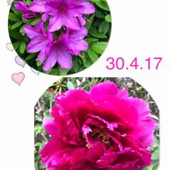 お花 今日の フォト  鮮やか ❣️