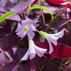 ベランダの草花 ☀️ 気持ち良い お天気です。 ベランダ…(4枚目)