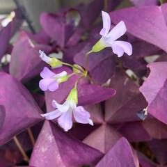 ベランダの草花 ☀️ 気持ち良い お天気です。 ベランダ…(6枚目)