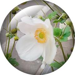 Flower/軽井沢 🌈🌴🦚🌺🍂🍁🌾🍄٩(*´︶`*)۶おはよ…
