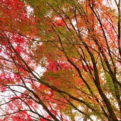 公園/風景 🌈🌴🌺🦚🍂🍁🌾🍄こんにちは(*ˊᵕˋ*)…(1枚目)
