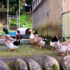 ガーデン/動物/風景 🌈🌴🌺🦚🍂🍁🌾🍄  🦚新潟のお庭にいたア…