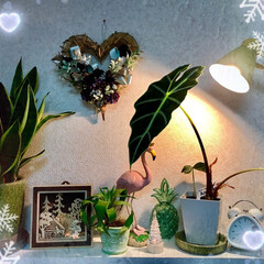Flower/Xmas 🌈🌴🌺🦚🎄✨💕  BathroomのXm…