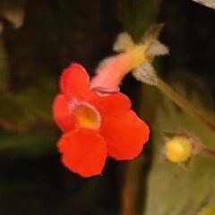 ガーデン/Flower 🌈🌺🐢💃🌴🌻🌴🍍  🇧🇷ブラジル方面で見…(2枚目)