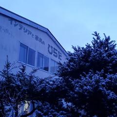 まだ冬/雪/北海道/標茶町/標茶/ひらた家具店 今時期の雪なら降っても積もらないと分かっ…