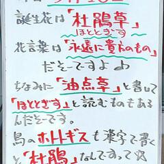誕生花/今日は何の日/A型看板/ホワイトボード/平田家具店/ひらた家具店 おはようございます! 本日のホワイトボー…(1枚目)