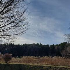 季節/冬/しべちゃ/標茶町/標茶/道東/... 本日の午前中に仕事先で撮影。 北海道の道…