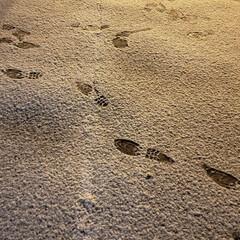 冬/初冬/雪/標茶/道東/北海道/... 先ほど、外にいたんですが… 雪がうっすら…