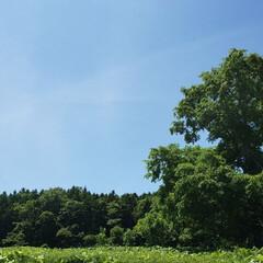 夏/標茶/ひらた家具店 今日はここ標茶(しべちゃ)では良い天気で…