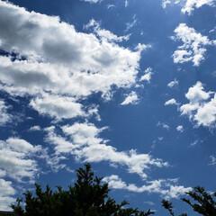 太陽/空/晴れ/天気/道東/標茶/... 今日は久しぶりに太陽が出ております。 気…