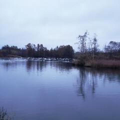 標茶/道東/北海道/配達中/仕事中/鳥/... 今日、配達に行った先の近くに大きめの池が…