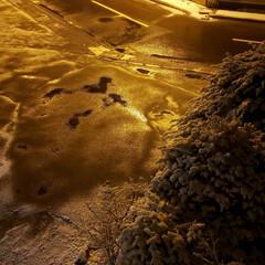 平成最後の雪/平成最後/雪/標茶/道東/北海道/... この写真、冬の写真…じゃなく昨夜12時頃…