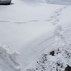 標茶/雪かき/雪/冬/ひらた家具店 今朝のひらた家具店の駐車場。 大雪警報が…