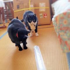 癒し/配達中/ネコ/ひらた家具店/猫/にゃんこ同好会 配達先にいたネコちゃんたち。 写真ネコち…