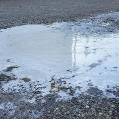 冬/水たまり/水溜まり/凍り/氷/寒波/... これは今朝の水溜まりの写真。 すっかり凍…