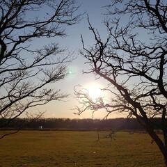 夕陽/夕日/夕暮れ/太陽/風景/配達帰り/... 本日の配達帰りの一枚。 ちょうど太陽が落…