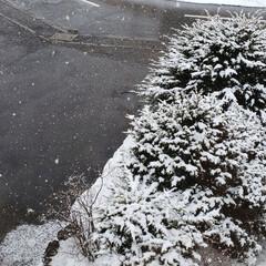 まだ冬/雪/標茶/北海道/駐車場/ひらた家具店 ひらた家具店の駐車場。 天気予報通り、雪…