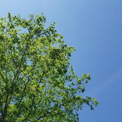 新緑/仕事中/初夏/北海道/標茶/ひらた家具店/... 本日の配達先での一枚。  今日は「初夏」…