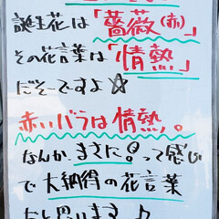 誕生花/A型看板/ホワイトボード/ひらた家具店 おはようございます! 本日のホワイトボー…