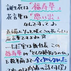 福寿草/誕生花/今日は何の日/A型看板/ホワイトボード/平田家具店/... おはようございます! 本日のホワイトボー…