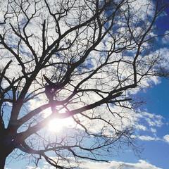 配達帰り/太陽/空/落葉/樹/木/... 配達帰りに一枚、その2。  葉っぱがすっ…