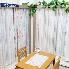 イージーオーダー/レースカーテン/カーテン/インテリア/ひらた家具店 こちらはひらた家具店のカーテン売り場。 …