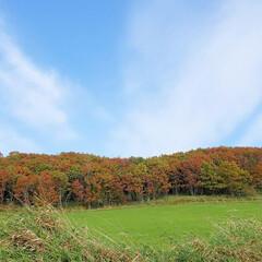 道東/配達/紅葉狩り/紅葉/ひらた家具店/秋 配達で山道を走っていると、山の木々が色付…