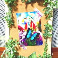 コルクボード/蜷川実花/葉祥明/ポストカード/リース/ハンドメイド/... キャンドゥでナチュラルなお花🌸を見つけた…(2枚目)