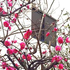 トールペイント/お雛様/ハンドメイド お雛様玄関に飾りました🤗 20年以上前に…(5枚目)