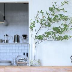 枝もの/花器/暮らし/雑貨/インテリア/ニトリ/... こんばんは!枝ものをいれた花器。コロンと…