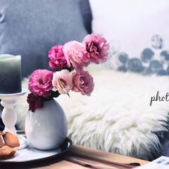 花/花のある暮らし/ピンク ソファー周りに彩りを