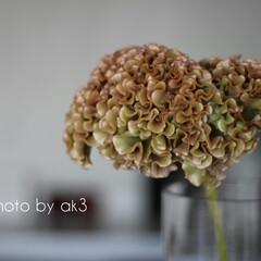 ケイトウ/花/花のある暮らし/植物/秋/季節の花 ケイトウ ベルベットのような この質感が…