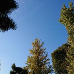 ドライブ/散歩/秋/風景/おでかけ 【秋の一枚】とても天気が良く秋晴れの1日…