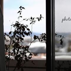 グリーン/グリーンのある暮らし 部屋から外を眺めてみる(1枚目)
