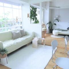 リビング/DIY/インテリア/家具/ニトリ/無印良品/... 3シーターのソファ。デイベッドも配置。ど…(1枚目)