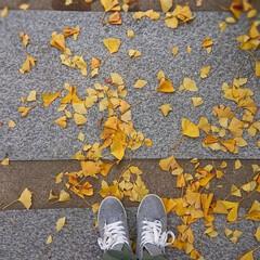落葉/銀杏/秋/風景/おでかけ 【秋の一枚】お買い物やら何やらで あちこ…