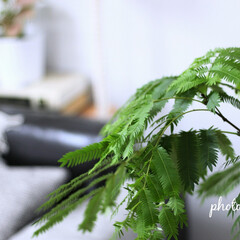 グリーン/グリーンのある暮らし 昼間は綺麗に葉を広げてくれます(1枚目)