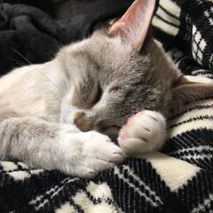猫との暮らし/にゃんこ同好会/おやすみショット 無防備に爆睡中w