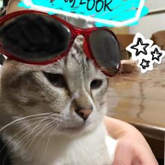親バカ飼い主/イケメンに変身/猫との暮らし/保護猫ちゃん 子供たちが末っ子くんをイケメンに改造して…