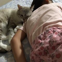 癒される/仲良し/猫との暮らし 末っ子2人が仲良く添い寝❣️ 2人とも末…